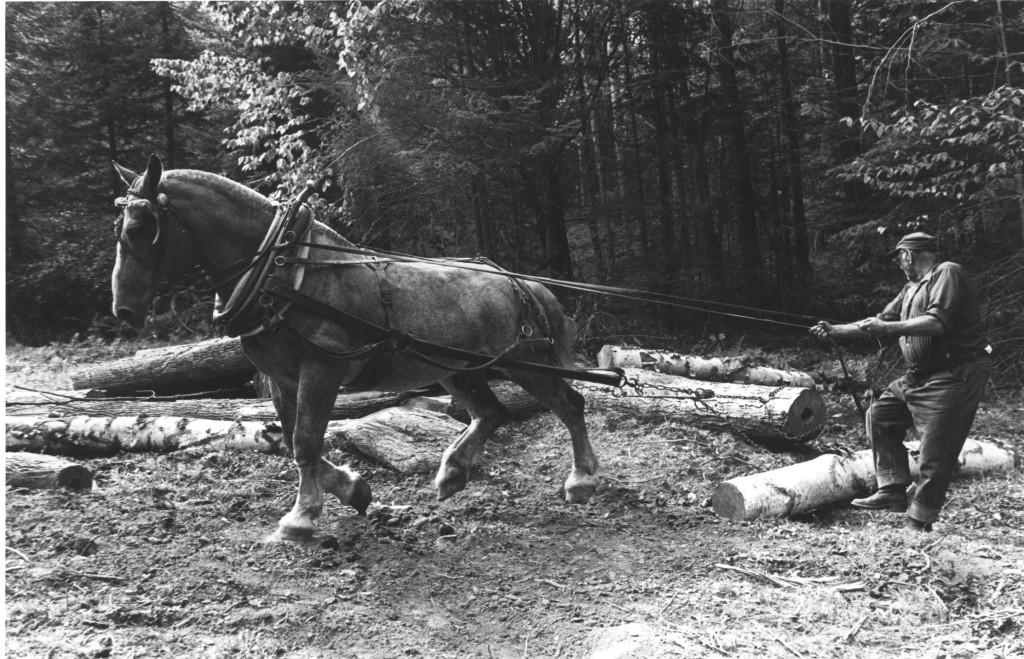 VAMP-Chester-Grimes-Horse-logs
