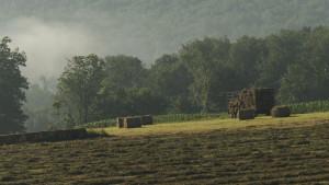 hay-corn-beauty